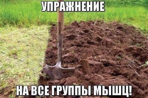 картинки приколы русский 676