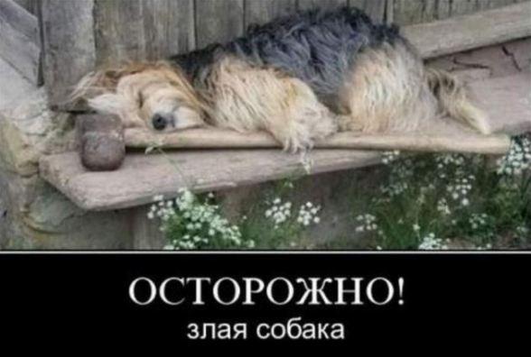 юмористические фотографии в картинках