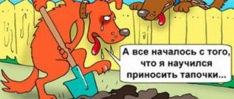 читать анекдоты 456