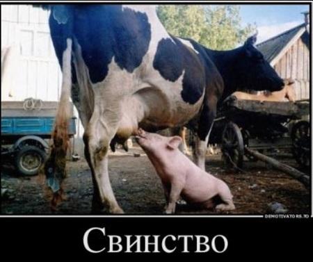 картинки забавные животные скачать бесплатно