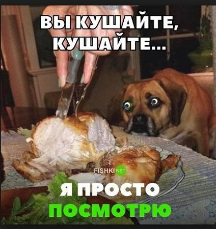 приколы фото по русски с надписями