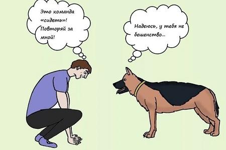 ржачный анекдот про собаку